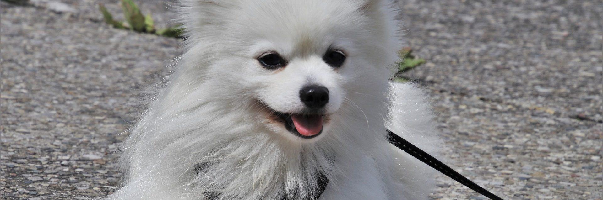 El hombre del perrito es un relato de Marcos y Laura escrito por Miguel Rodríguez Echeandía para su blog personal.