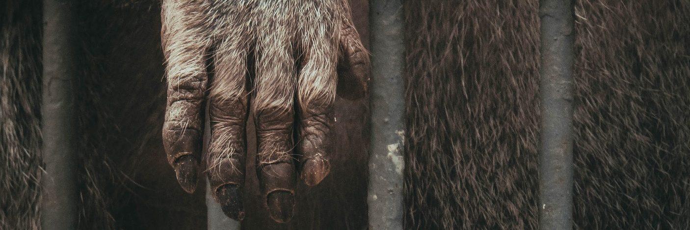 El zoo es un relato de Miguel Rodríguez Echeandía sobre las paradojas que se han dado durante la cuarentena motivada por el COVID19